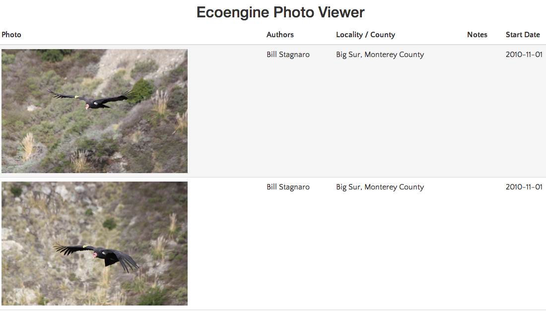 Ecoengine photo viewer