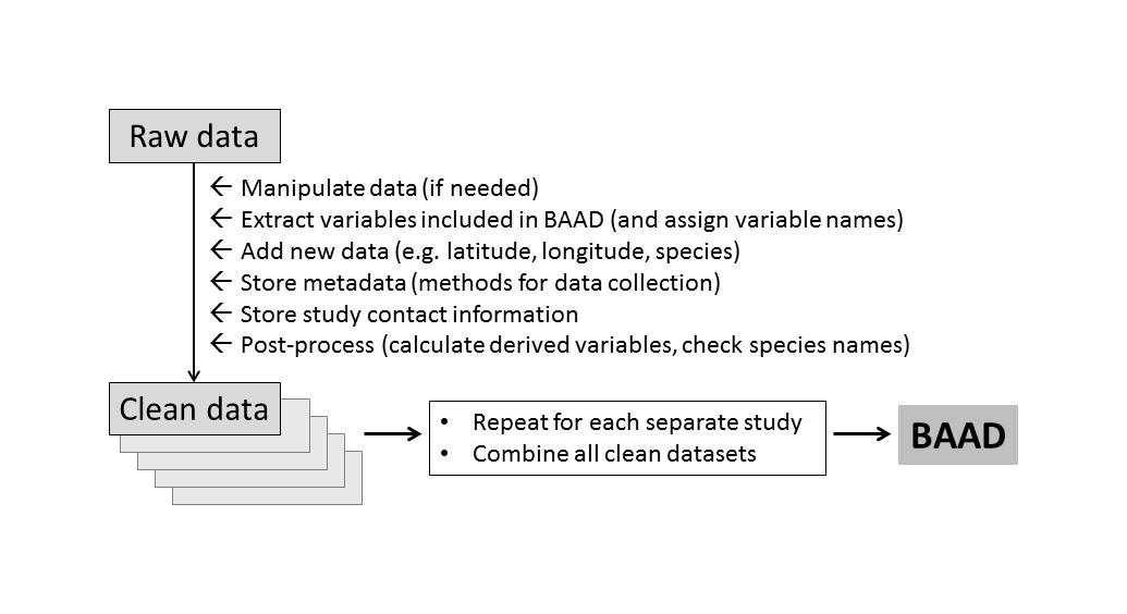 baad figure 1