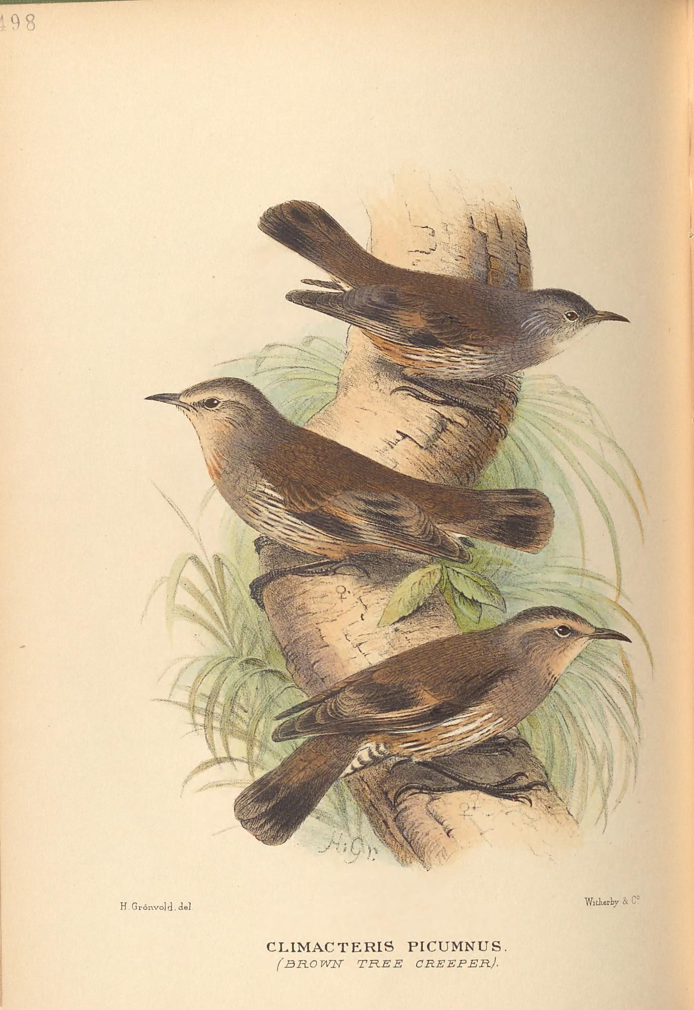What's this bird? Classify old natural history drawings with R